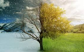2013.09 - Neswletter - half tree